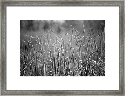 Rushes Framed Print