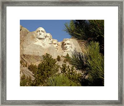 Rushmore Pine Needles Framed Print by Mike Oistad