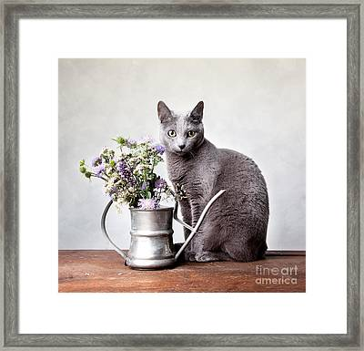 Russian Blue 02 Framed Print by Nailia Schwarz