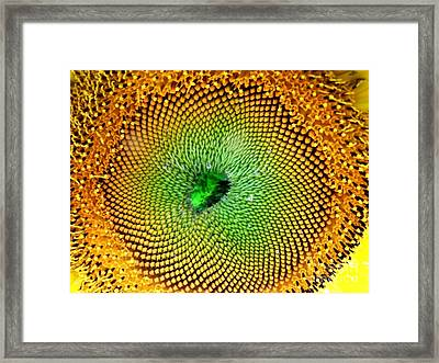 Framed Print featuring the photograph Russian Giant by Erica Hanel