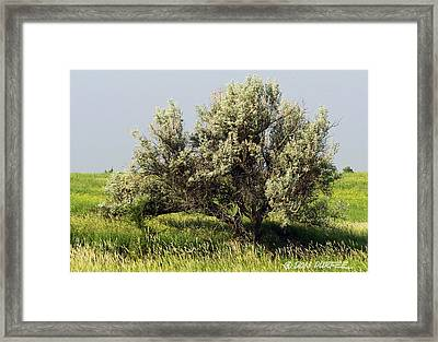 Russian Olive On The Prairie Framed Print by Don Durfee