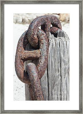 Rusted Ship Anchor Of The Caribbean Framed Print by David Letts