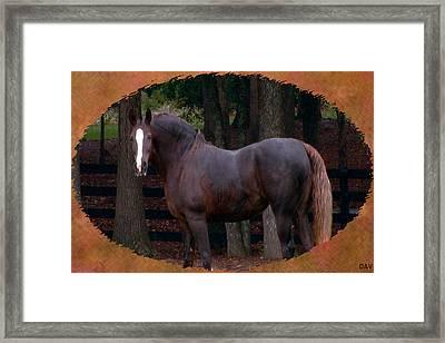 Rustic Beauty  Framed Print by Debra     Vatalaro