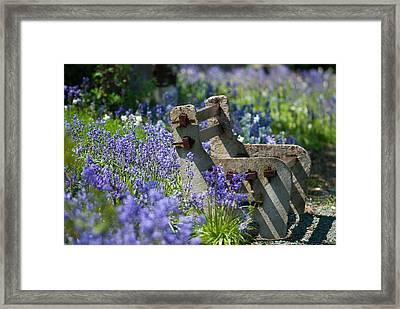 Rustic Bench Framed Print by Amanda Elwell
