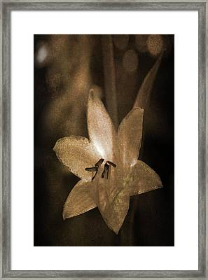Rustic Bloom Framed Print