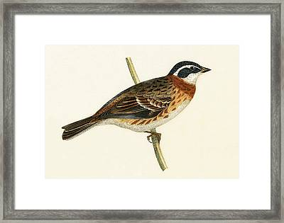 Rustic Bunting Framed Print