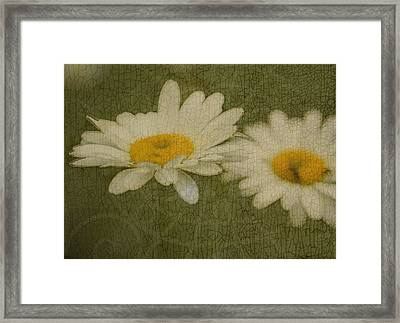 Rustic Daisies Framed Print by Tingy Wende