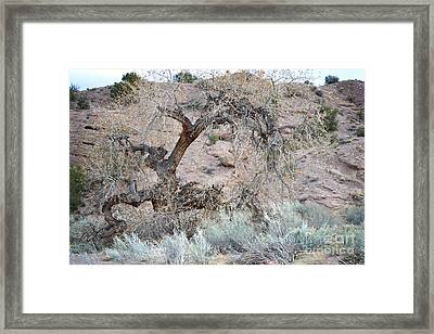 Framed Print featuring the photograph Rustic Desert Tree by Andrea Hazel Ihlefeld