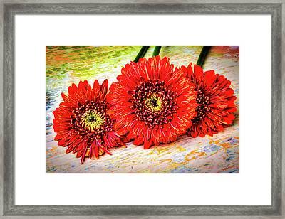 Rustic Red Dasies Framed Print by Garry Gay