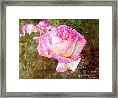 Rustic Rose Framed Print