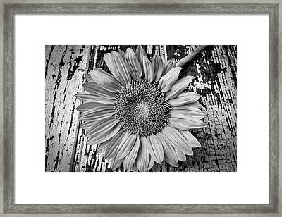Rustic Sunflower Framed Print by Garry Gay
