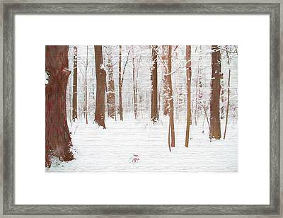 Rustic Winter Forest Framed Print by Dan Sproul