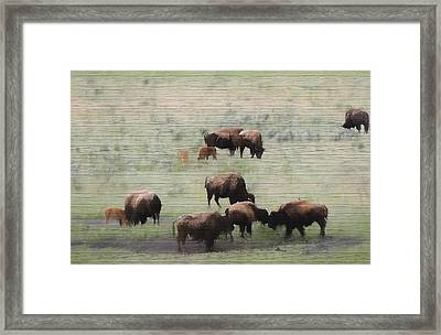 Rustic Yellowstone Bison Herd Framed Print
