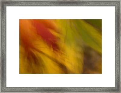 Rustling Leaves Framed Print