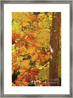 Rusty Autumn Fall Color Leaves In The Blue Ridge Ap Framed Print by Dan Carmichael