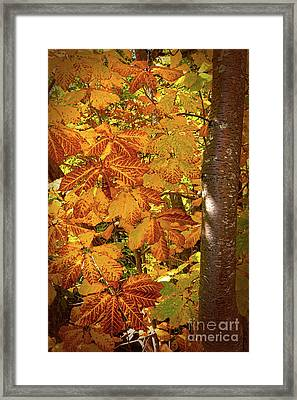 Rusty Autumn Fall Color Leaves In The Blue Ridge Framed Print by Dan Carmichael