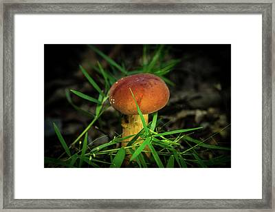 Rusty Brown Plyporacead Amid The Grass Framed Print