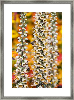 Rusty Foxgloves Framed Print by Tim Gainey