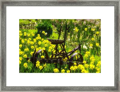 Rusty Plow In Daffodils  Framed Print by Garry Gay
