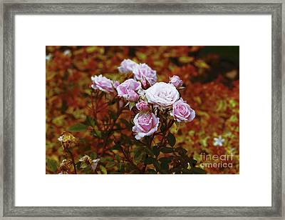 Rusty Romance In Pink Framed Print