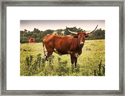 Rusty Framed Print by Tamyra Ayles