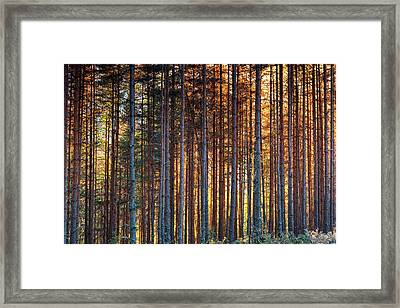 Rusy Forest Framed Print by Evgeni Dinev