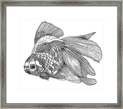 Ryukin - Goldfish Framed Print by Shih Chang Yang