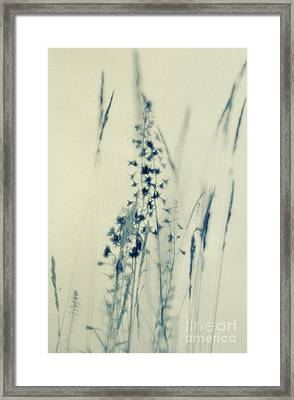 Summer Meadow Poem 2 Framed Print by Priska Wettstein