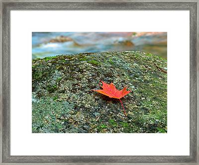 Sabbaday Brook Framed Print by Juergen Roth