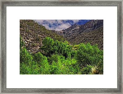 Framed Print featuring the photograph Sabino Canyon H33 by Mark Myhaver