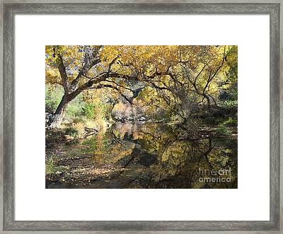Sabino Canyon In Fall Framed Print
