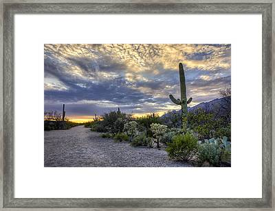 Sabino Canyon - Tucson - Arizona Framed Print