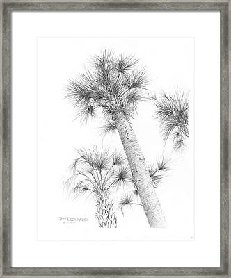 Sable Cabbage Palm Framed Print