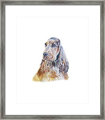 Sable English Cocker Spaniel Framed Print by Linda Zielinski