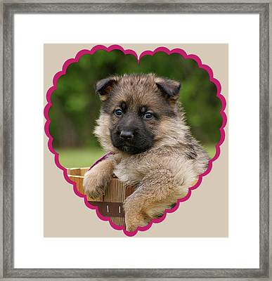 Sable Puppy In Heart Framed Print by Sandy Keeton
