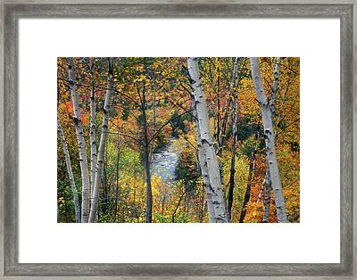 Saco River And Birches Framed Print by John Burk