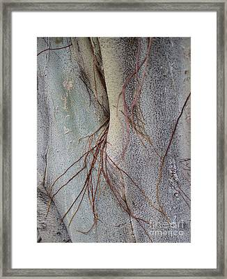 Sacred Bodhi Tree Detail With Red Creeper Vines Framed Print