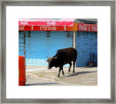 Framed Print featuring the photograph Sacred Cow 1 by Randall Weidner