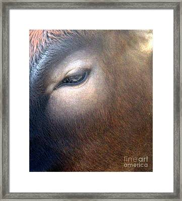 Framed Print featuring the photograph Sacred Cow 5 by Randall Weidner