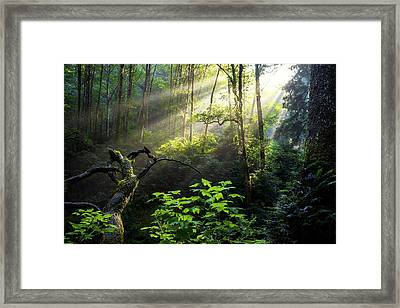 Sacred Light Framed Print by Chad Dutson