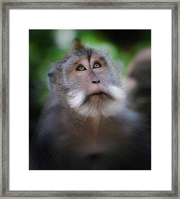 Sacred Monkey Forest Sanctuary Framed Print