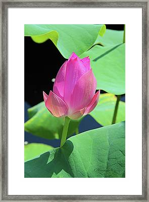 Sacred Pink Framed Print by Inspirational Photo Creations Audrey Woods