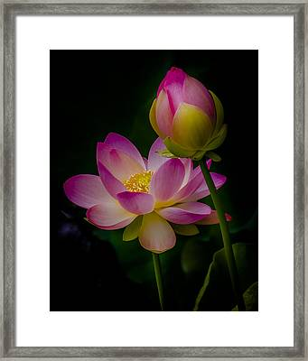 Sacred Water Lily 4 Framed Print