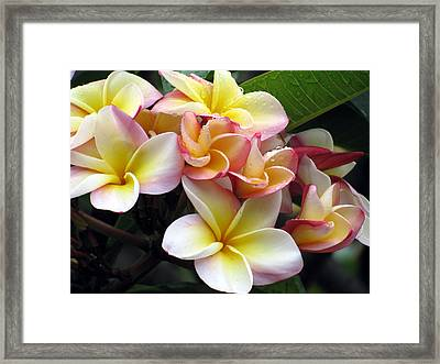 Sacuanjoche Framed Print by Sarah Hornsby