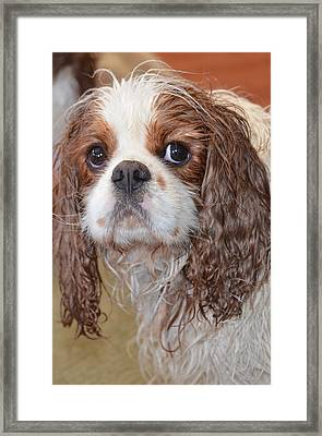 Sad After Bath Framed Print