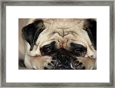 Sad Dog Framed Print by Michael Albright