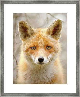 Sad Eyed Fox Of The Lowlands - Red Fox Portrait Framed Print by Roeselien Raimond