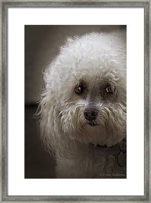 Sad Framed Print by Lynn Andrews