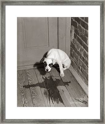 Sad Puppy Being House Trained, C.1950s Framed Print