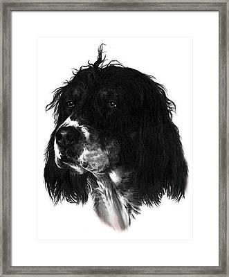 Sadie Framed Print by Rachel Christine Nowicki